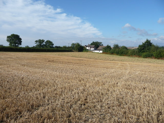 Footpath across August fields