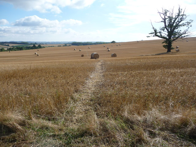 Footpath across fields in August