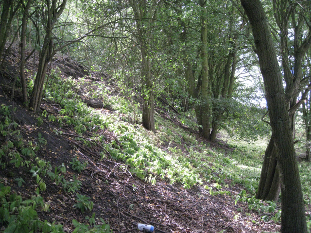Side of old railway embankment, Birch Coppice