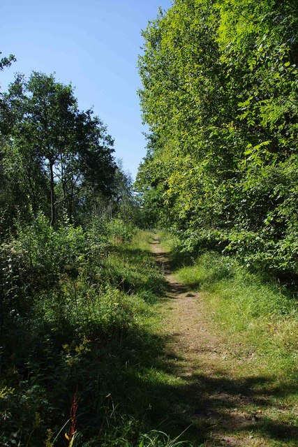 Nature Trail, Trench Wood, near Sale Green