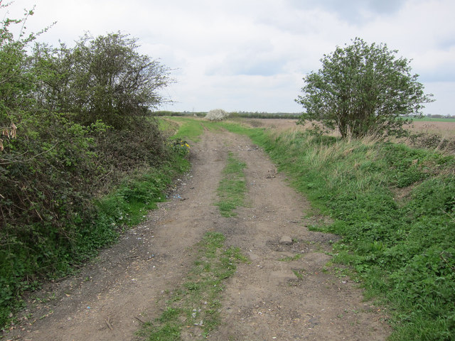 Pingle Lane