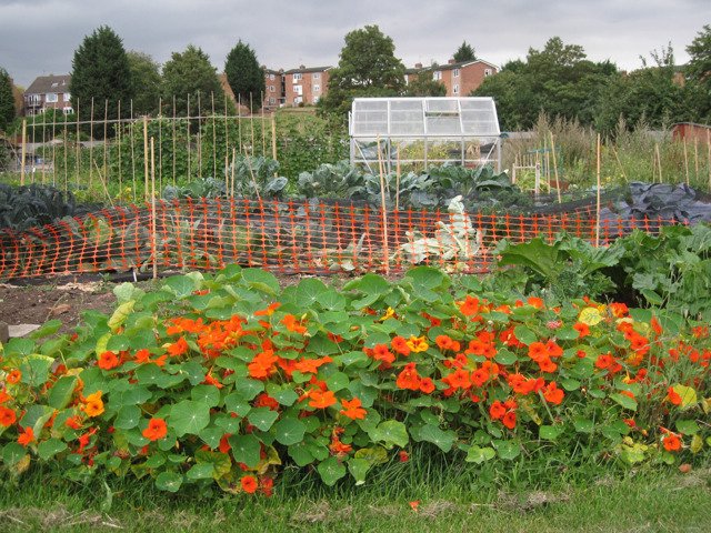 Greenhouse on Potterton's allotments, Warwick
