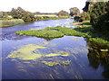 ST9101 : River Stour, Spetisbury by Maigheach-gheal