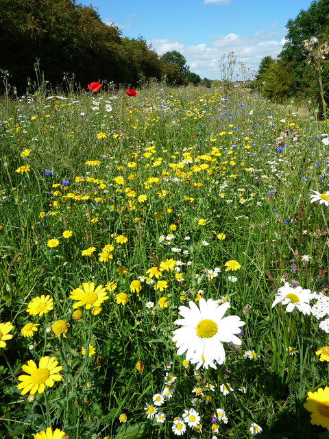 Wildflowers by The Horncastle Canal