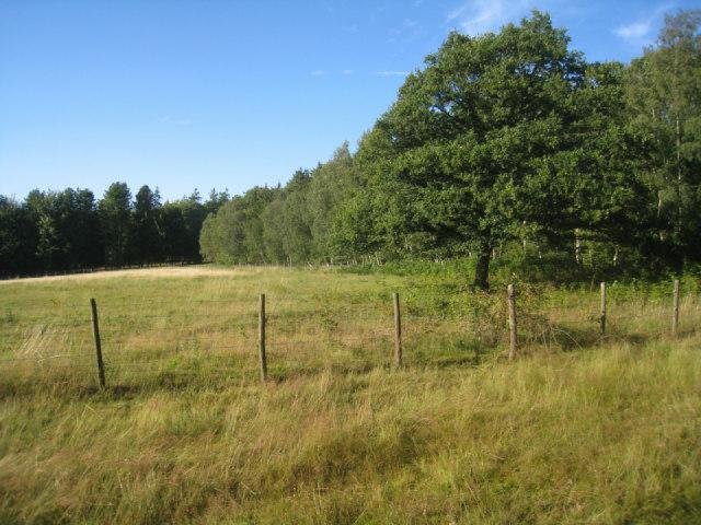 Field by Ashe Park Copse