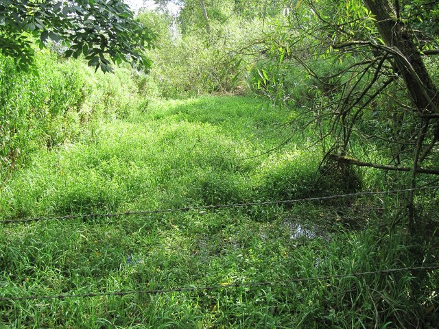Old Watercress bed?