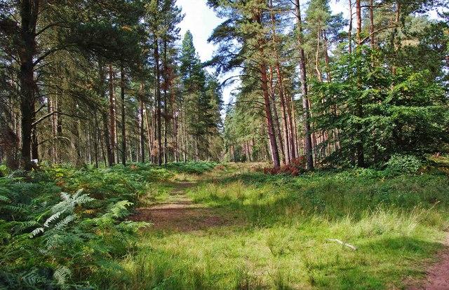Million Wood near Enville