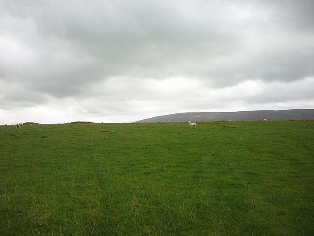 Sheep pasture near Swainshead Hall
