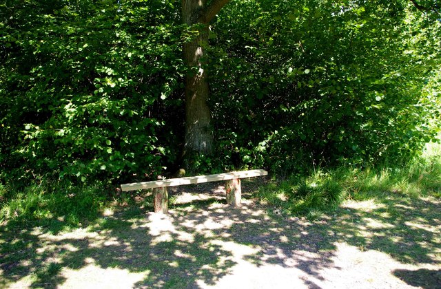 A sunny spot with a seat, Trench Wood, near Sale Green