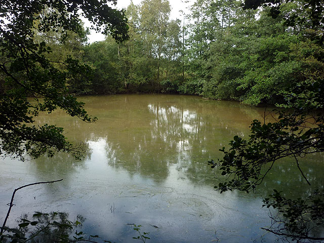 A stagnant pond by the Wyre