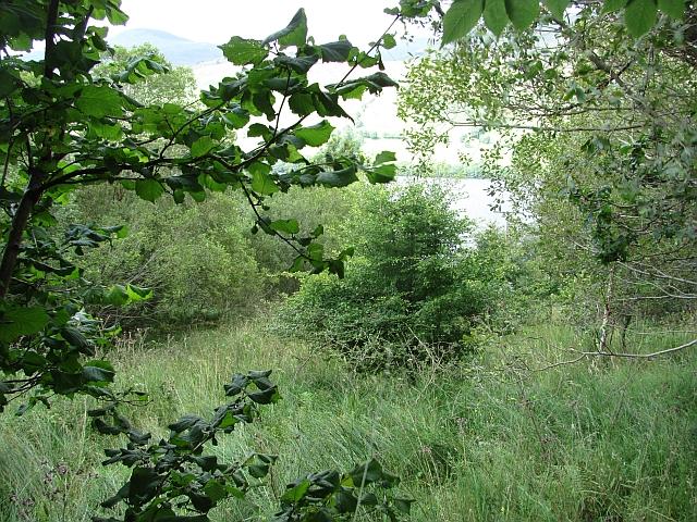 Woodland, Kepranich