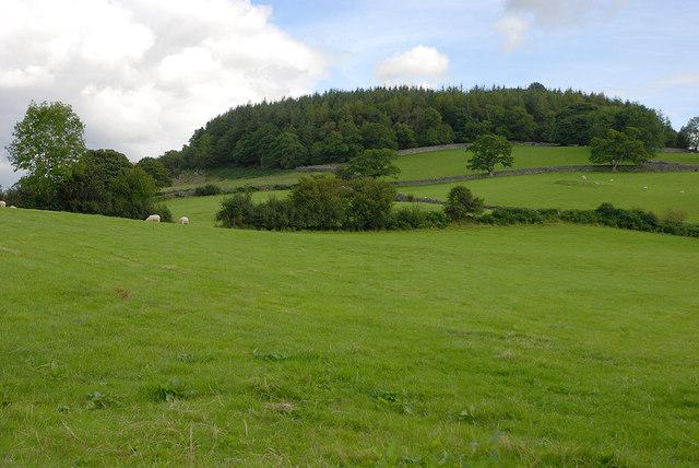 Fields east of Ty'n-y-cefn