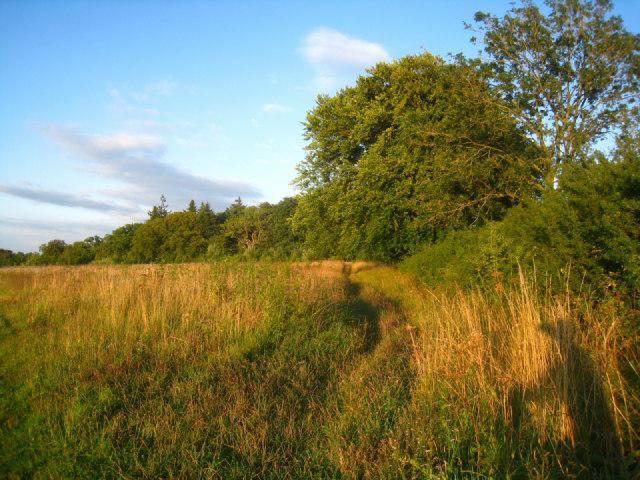 Hedgerow in Oakley Park