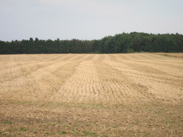 Harvested field off Chequers Hill Road
