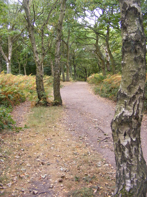 Kinver Ridge Path