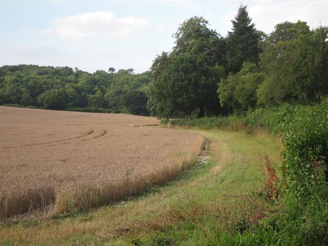 Field by Stalisfield Road