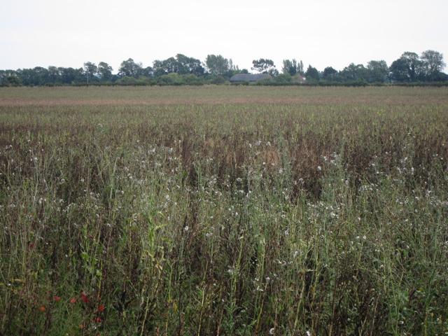 Crop field by Hayward's Hill