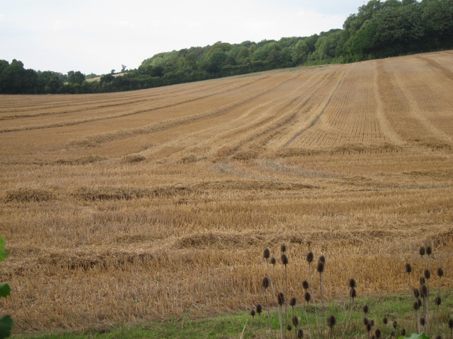 Harvested field by Bagshill Road