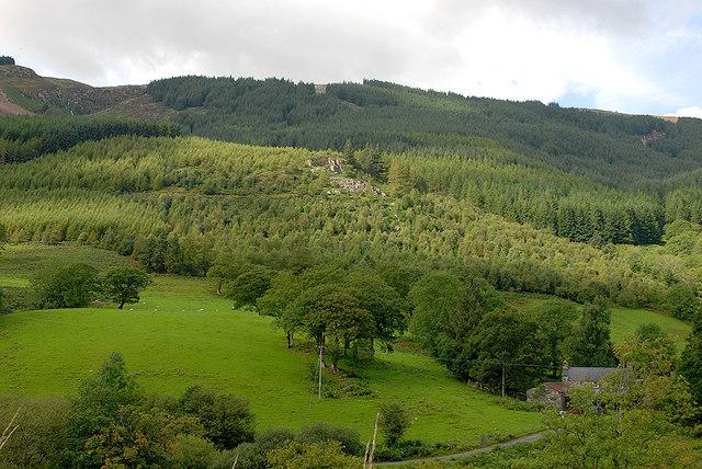 Forestry above Mynogau Uchaf farm