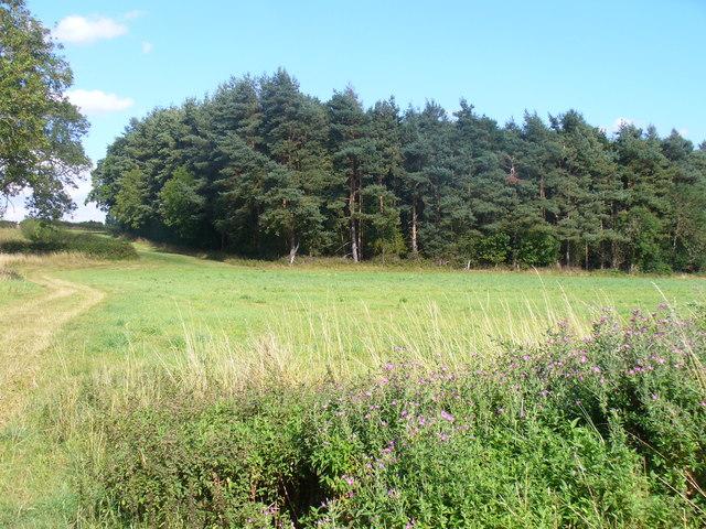 Greenhill Copse