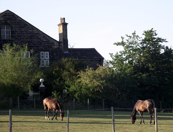 Horses grazing in the paddock to the front of Balderstone Hall, Mirfield
