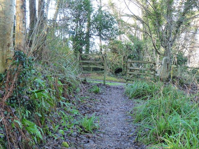 Smyrton Wood