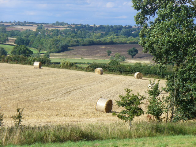 By Walcot Farm, Evenlode Valley