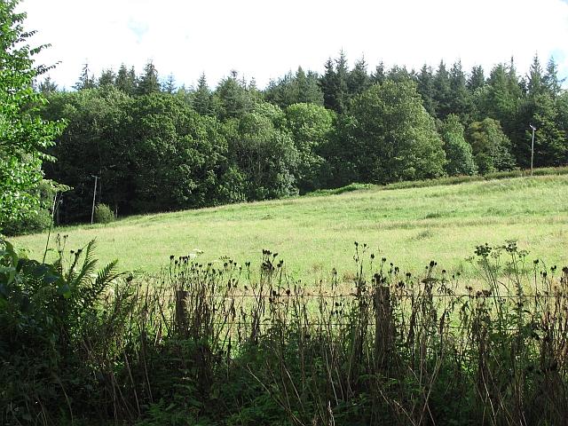Fields, Lurglomand