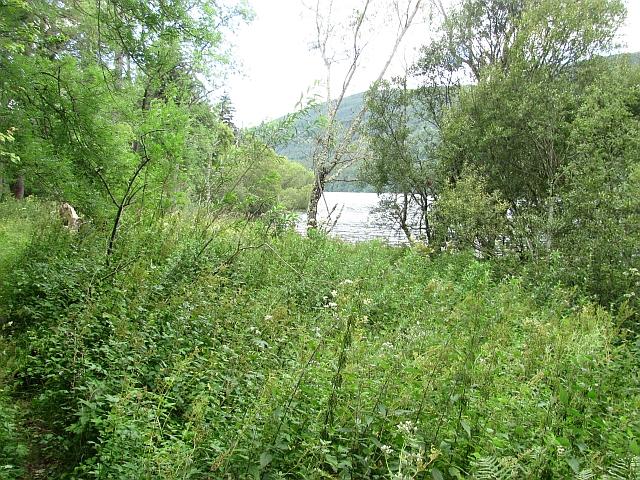 Woodland by Loch Tay