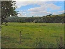 SU8712 : Farmland at Singleton by Paul Gillett