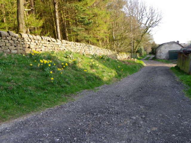 Bridleway, Rabbit Hill Wood
