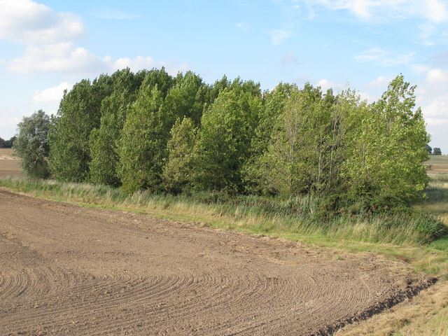 Trees on field boundary