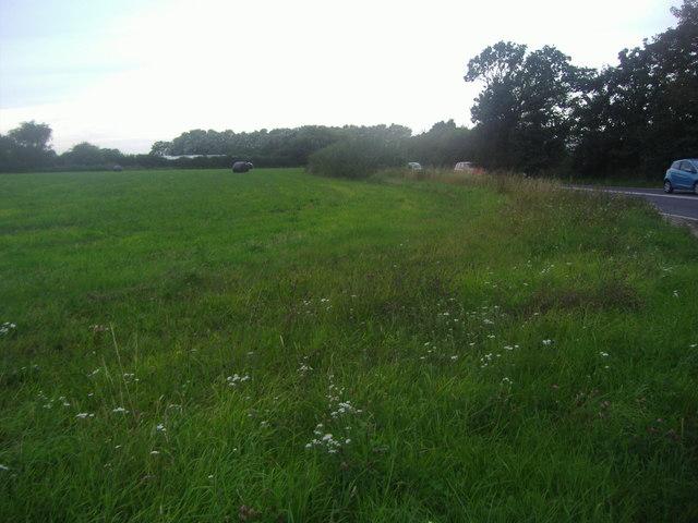 Field by Street End Road