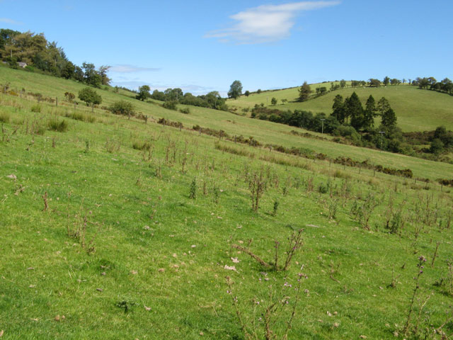 Pasture below Hill House