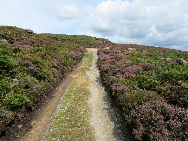 Track on Hammerthorn Hill