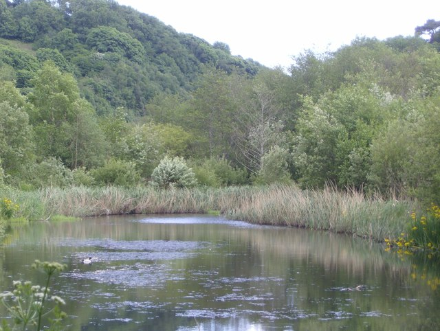 Waterfowl reserve on the Seaton Countryside Park