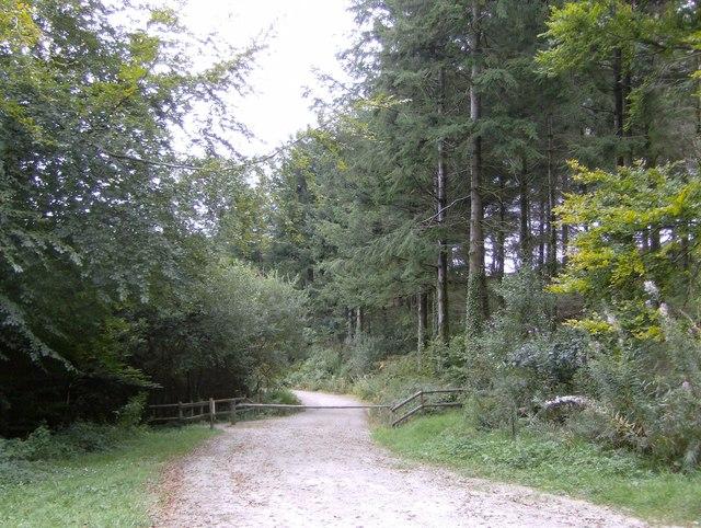 Public track through Deer Park Woods