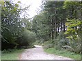SX1960 : Public track through Deer Park Woods by Eric Foster