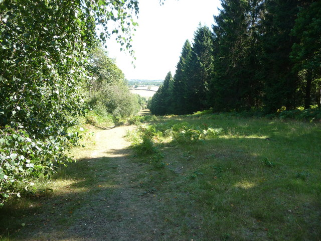 Footpath in the Wyre Forest near Buttonoak