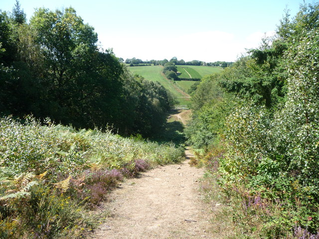 Footpath in the Wyre Forest