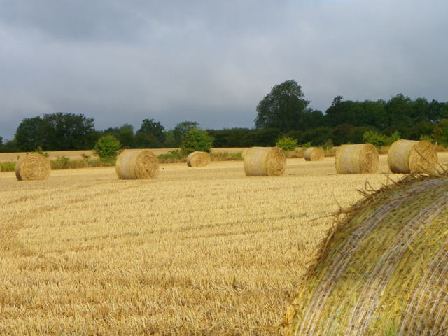 Straw bales near Upton Scudamore