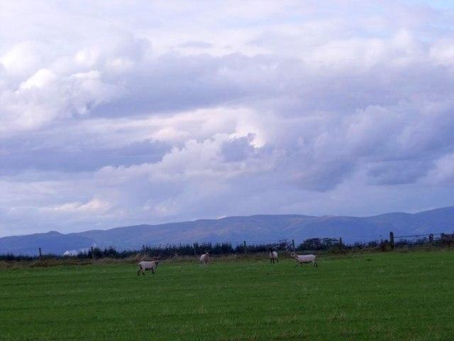 Easter Jawcraig, grazing