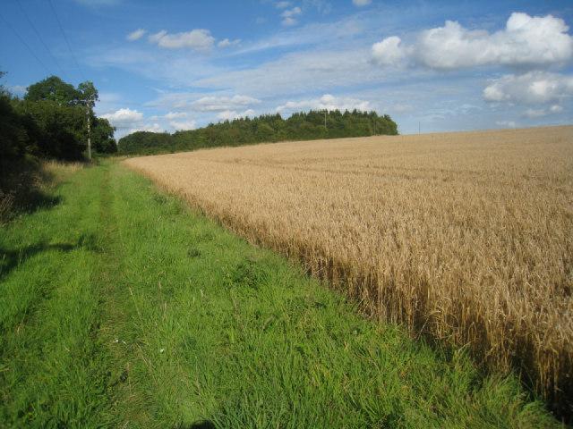 Footpath along field margin