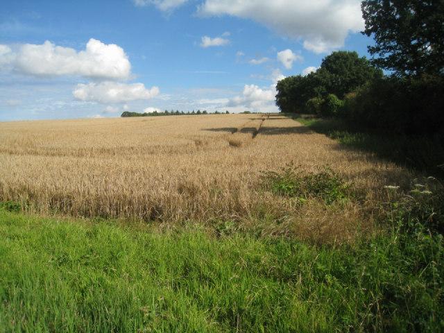 Field boundary - Nurshanger Farm