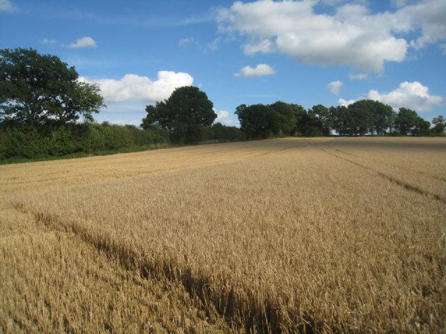 Harvested field margin