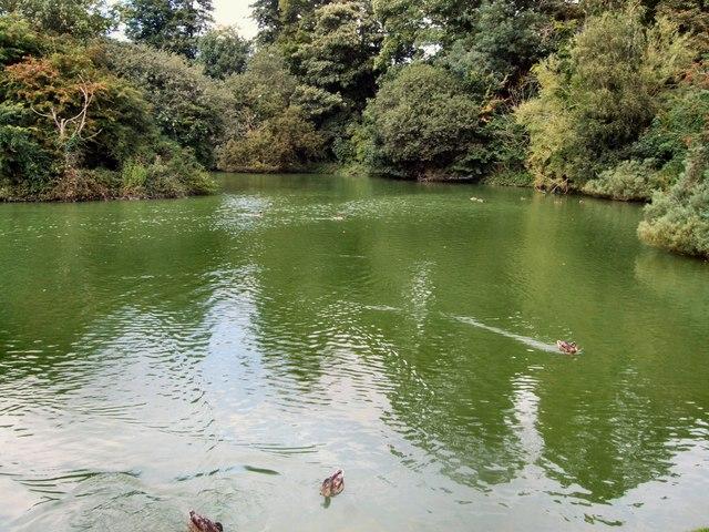 Lake - Singleton