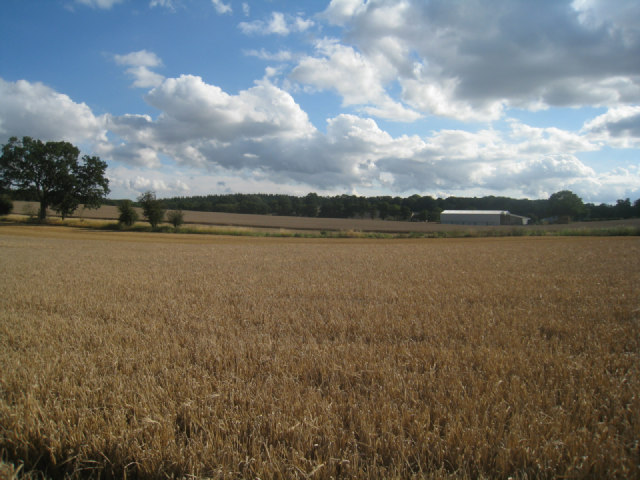 Looking towards Nurshanger Farm
