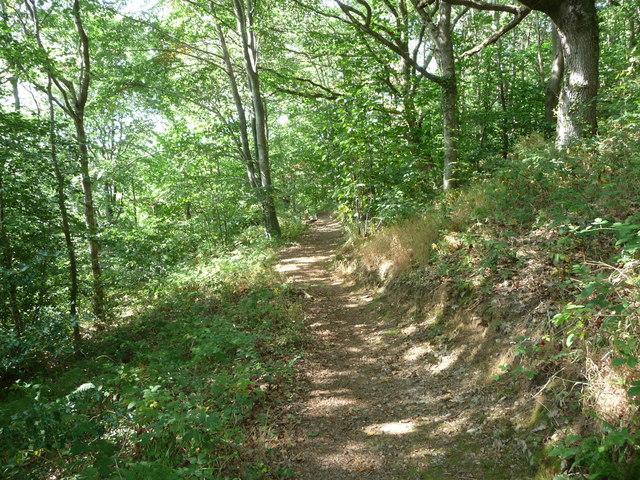 Footpath in woodland above the Afon Aeron