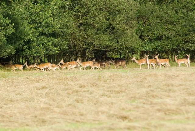 Writtle Residents