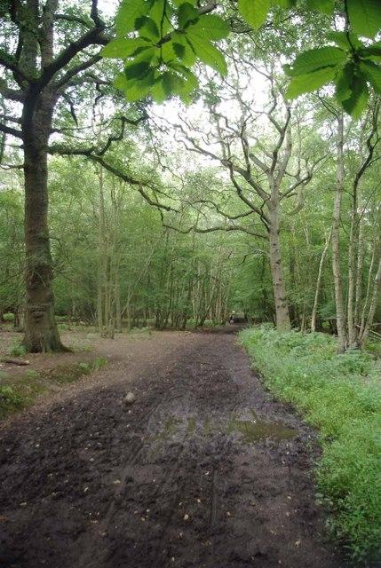 Bridleway Birch Spring Wood